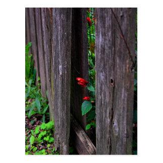 Cartão Postal Cerca do jardim
