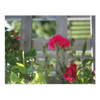 Cartão Postal Cerca dos rosas