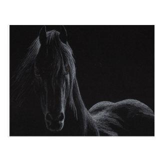 Cartão Postal Coleção do cavalo do cavaleiro