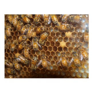 Cartão Postal Colmeia da abelha