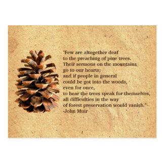 Cartão Postal Cone do pinho e citações de John Muir
