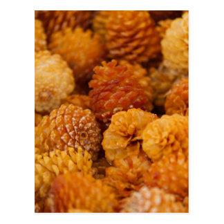 Cartão Postal cones secos do pinho