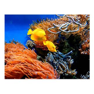 Cartão Postal Coral submarino tropical