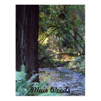 Cartão Postal Córrego das madeiras de Muir
