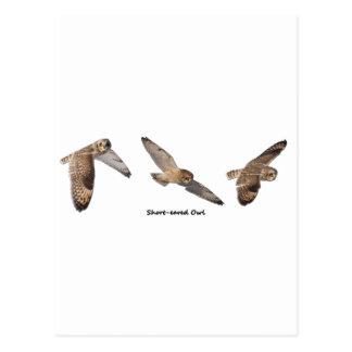 Cartão Postal coruja Curto-orelhuda em vôo