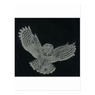Cartão Postal coruja de noite