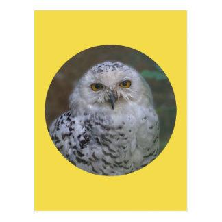 Cartão Postal Coruja nevado, Schnee-Eule 02_rd