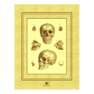 Cartão Postal Crânios antigos