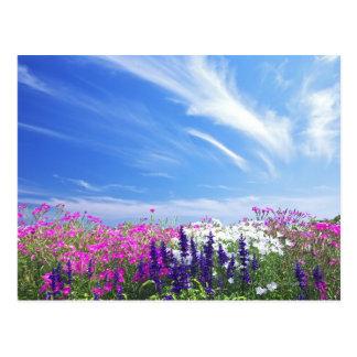 Cartão Postal Cravo-da-índia e flores de Salvia