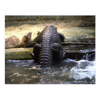 Cartão Postal Crocodilo do anão