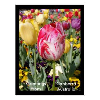 Cartão Postal Cumprimentos de Canberra Austrália