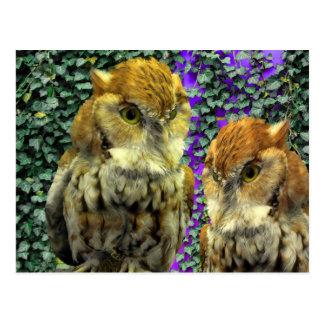 """Cartão Postal Da """"design do olhar coruja"""" para miúdos & adulto"""