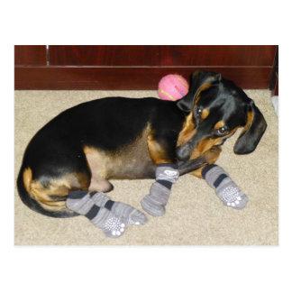 Cartão Postal Dachshund bonito que veste meias
