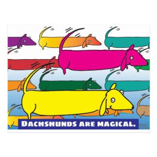 Cartão Postal Dachshunds mágicos