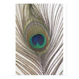 Cartão Postal Design bonito do pavão