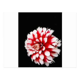 Cartão Postal Design floral preto