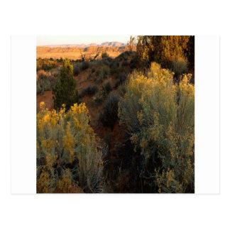 Cartão Postal Escova do deserto da garganta da natureza