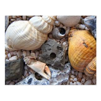Cartão Postal Escudos do mar em cima da praia