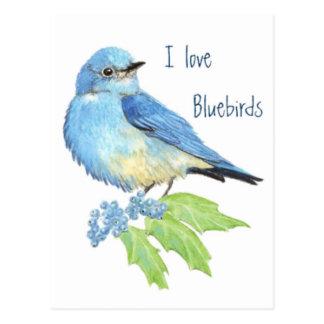 Cartão Postal Eu amo Bluebirds, coleção do pássaro