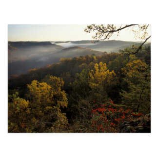 Cartão Postal EUA, Kentucky. Floresta nacional de Daniel Boone