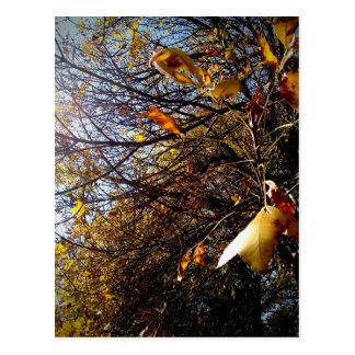 Cartão Postal Fall leaves