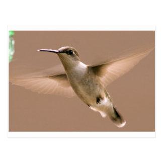 Cartão Postal Fêmea do colibri