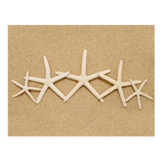 Cartão Postal Fileira da estrela do mar branca