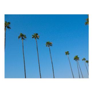 Cartão Postal Fileira das palmeiras