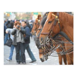 Cartão Postal Fileira do cavalo