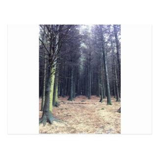 Cartão Postal Fileiras das árvores