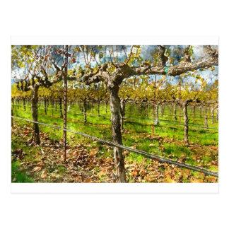 Cartão Postal Fileiras das vinhas em Napa Valley Califórnia