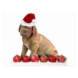 Cartão Postal Filhote de cachorro de Christas Dogue de Bordéus