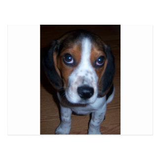 Cartão Postal Filhote de cachorro parvo do lebreiro de Randy do