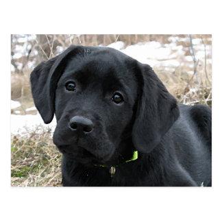 Cartão Postal Filhote de cachorro preto de Labrador - esperando