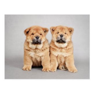 Cartão Postal Filhotes de cachorro da comida de comida