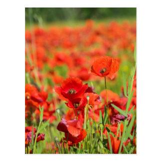 Cartão Postal Fim-acima de um campo da papoila, France