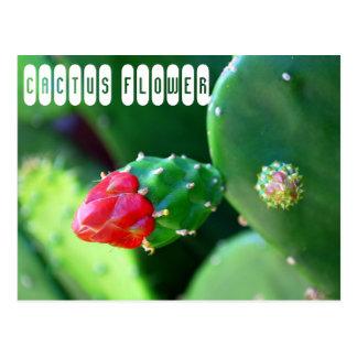Cartão Postal Flor do cacto
