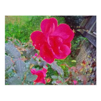 Cartão Postal Flor fúcsia do rosa do rosa na flor com orvalho da