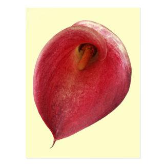 """Cartão Postal """"Flor vermelha brilhante do flamingo exótico"""""""