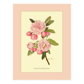 Cartão Postal Flores da árvore de Apple do caranguejo