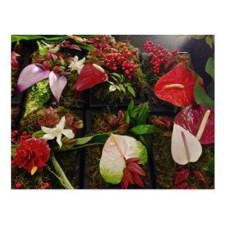 Cartão Postal Flores havaianas