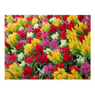 Cartão Postal Flores Multi-Coloridas