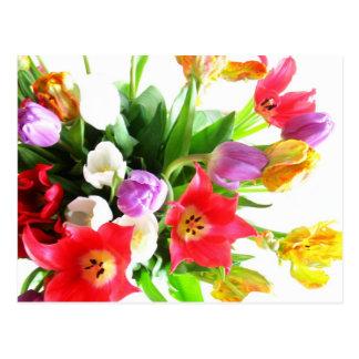 Cartão Postal Flores românticas da tulipa