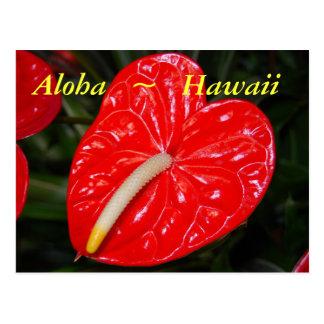 Cartão Postal Flores vermelhas havaianas do antúrio
