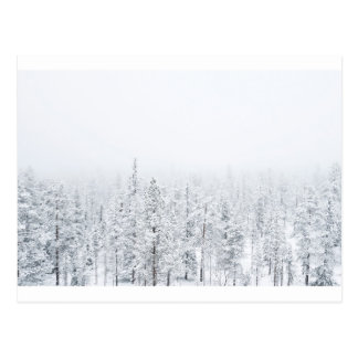 Cartão Postal Floresta nevado
