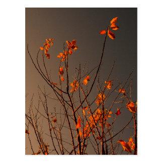Cartão Postal Folhas modernas elegantes da laranja em Bush