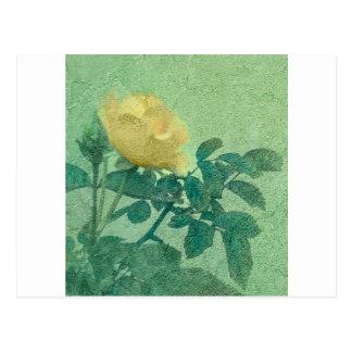 Cartão Postal Foto do estilo do vintage do rosa amarelo