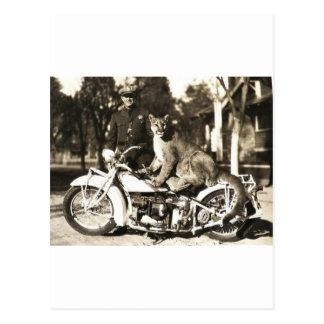 Cartão Postal foto do vintage do agente da polícia no puma da