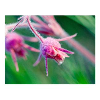 Cartão Postal Foto macro de flores da pradaria em Montana