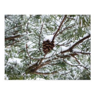 Cartão Postal Fotografia nevado da natureza do inverno do cone